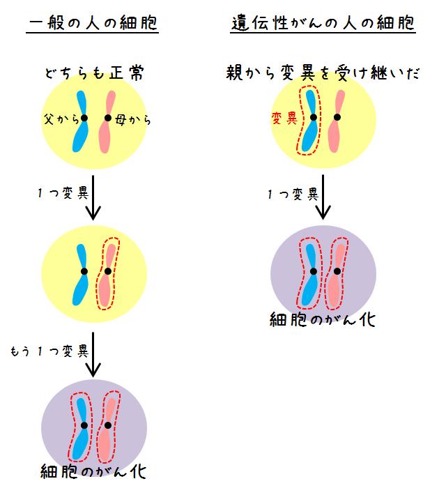 がん抑制遺伝子の変異