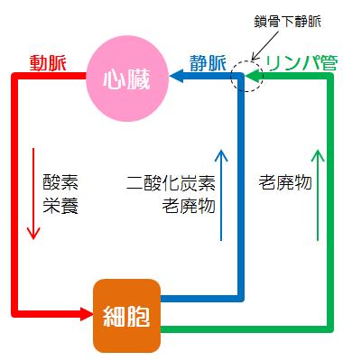 リンパの役割図