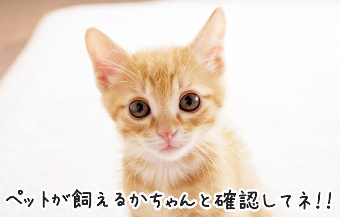 前を見つめる子猫