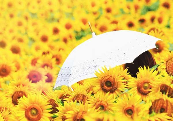 白い日傘と向日葵