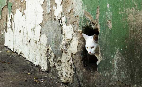 穴が開いた壁