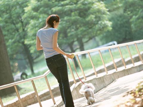 1人で犬の散歩をしている女性の後姿