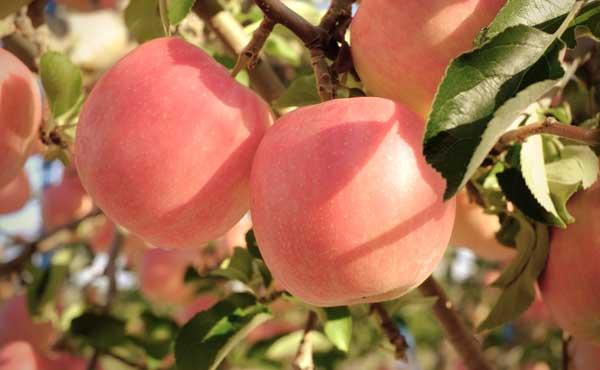 木になるりんごは重力で落ちる