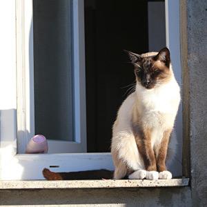 猫派女性は恋心をひた隠し、微塵も感じられないかも?