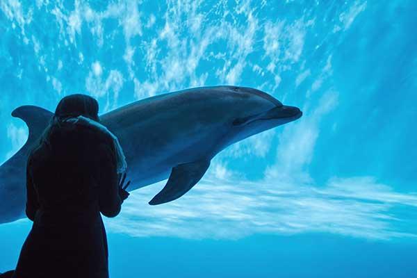 ホワイトデーに彼氏と一緒に楽しめる水族館チケット