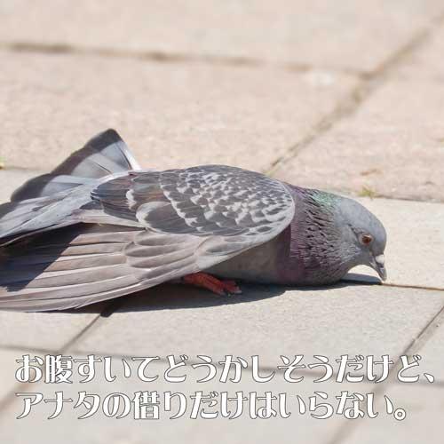 男性に仮は作りたくない男らしいタイプの鳩