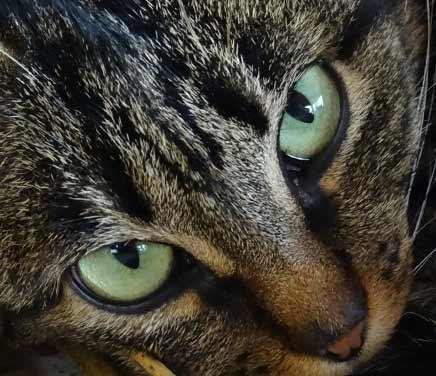 睨みつけている猫