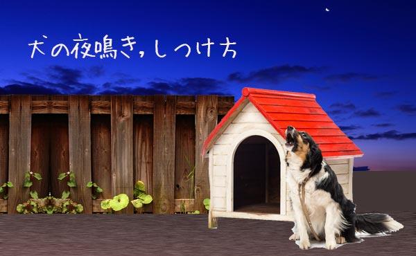 犬の夜鳴き対策・ワンワンうるさい犬の気持ちと躾け方