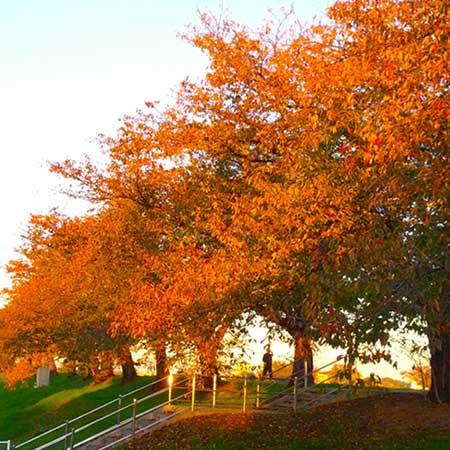 紅葉した公園の立ち木