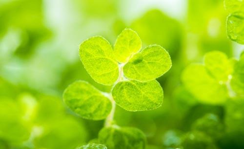 観葉植物のキレイな緑