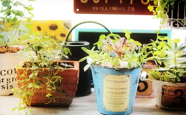 観葉植物がもたらす嬉しい効果4つ&初心者にオススメの6種!