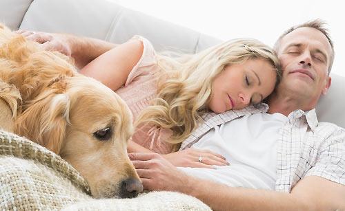 ペットとお昼寝するカップル