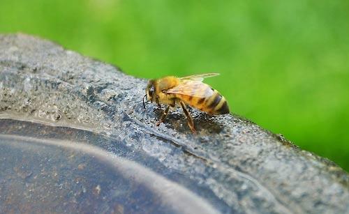 ミツバチにご注意!