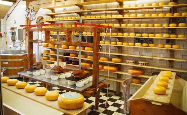 チーズの食品工場