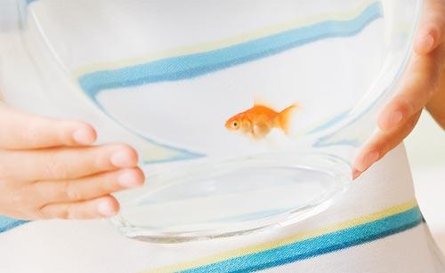 金魚を飼う男子