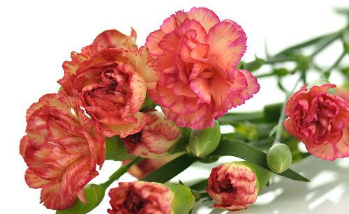 母の日に花をプレゼント
