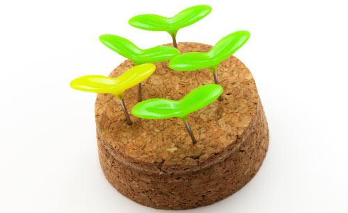 コルクから生える植物