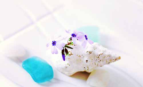 生け花を添えた貝殻