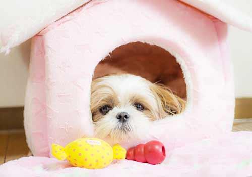 ハウスに入る犬