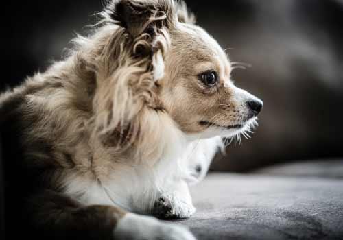 悲しむ子犬