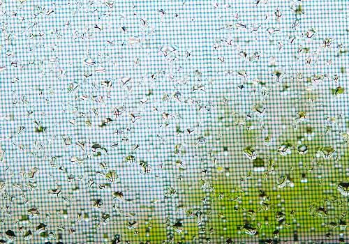 雨にぬれた網戸