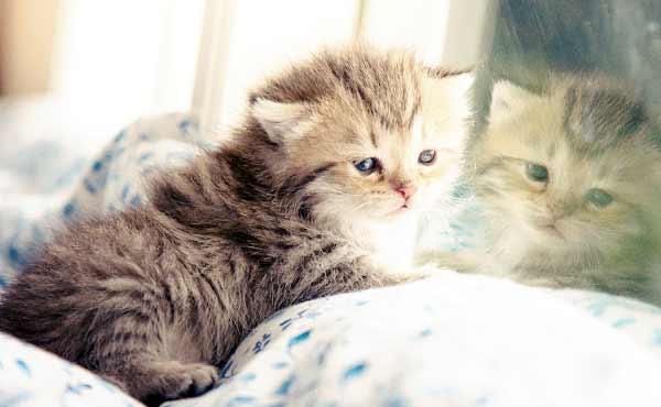 猫飼う準備と費用・ネコを迎える前に用意しておきたい物