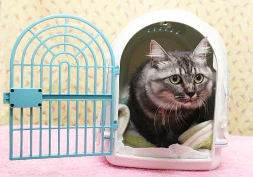 キャリーバッグの中でくつろぐ猫