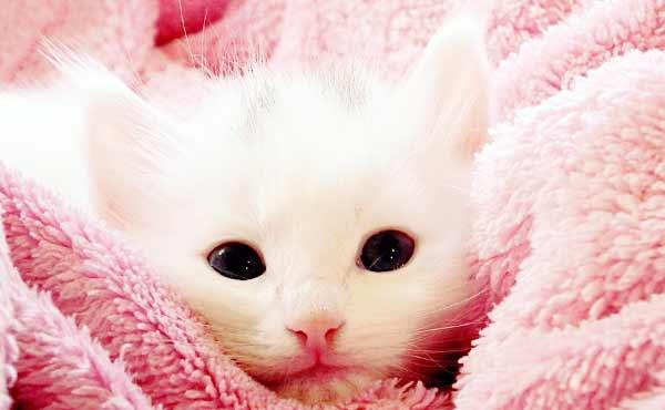 猫の飼い方・ネコの幸せをガッチリ守る飼い主になる心得