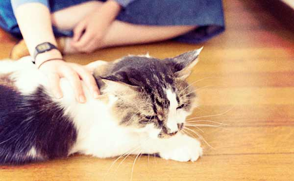 猫のしつけ・愛するネコに教えるべき大事なこと