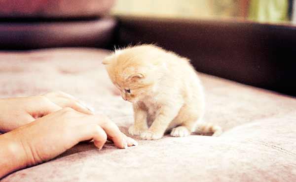 一人暮らしのペットにおすすめ・心がほっこりする動物たち