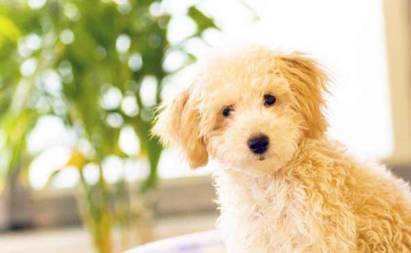 子犬のしつけ方・可愛いからこそ早めに教えておきたいこと