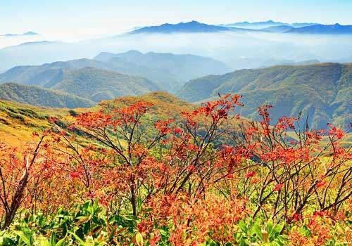 紅葉と白根山