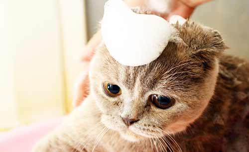 シャンプーされている猫