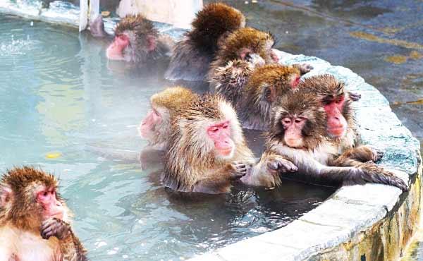 人気温泉まとめ・1度訪れたい北海道・東北・関東のお風呂