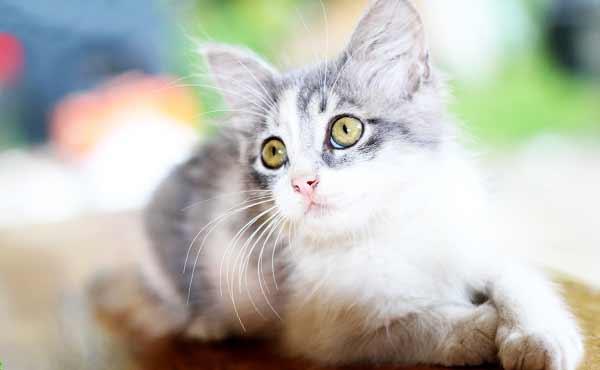 ネコの種類・性格や行動パターンの特徴を飼う前にチェック