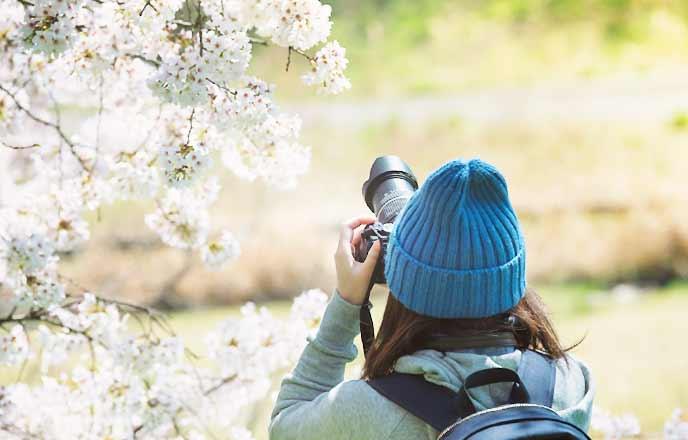 桜の花を撮影する女性
