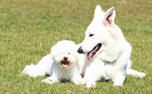 人気犬種・小型犬と大型犬ライフスタイルに合うのはどっち
