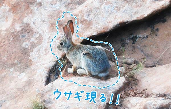 ウサギ現る!