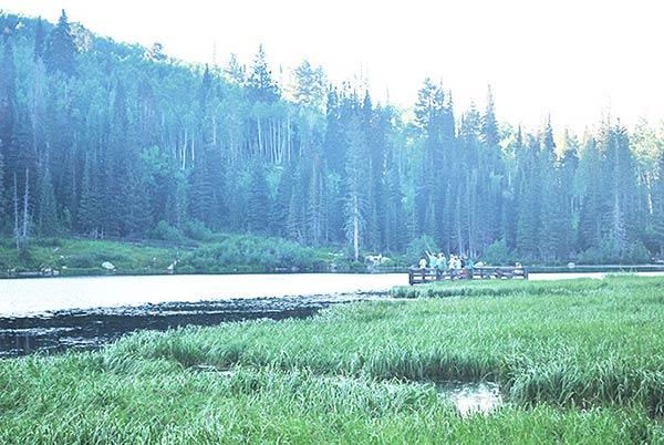 それにしてものどかな湖畔です