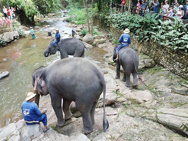 象が川で水を浴びていますね