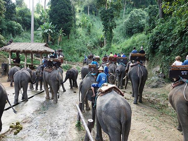 こちらでは象が散歩をしています