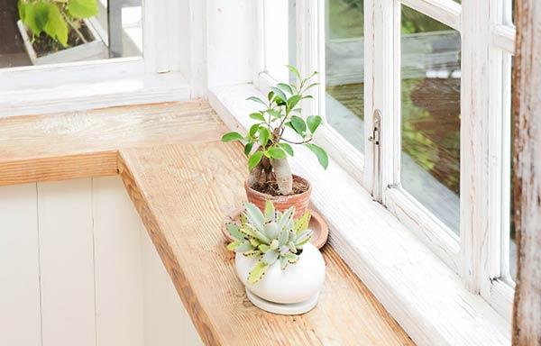 窓辺に置いた観葉植物