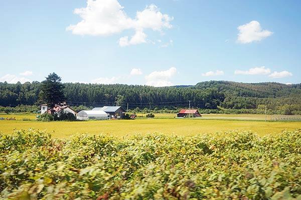 森町の田園風景