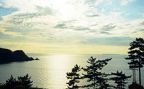 松の木と一緒に眺める日本海