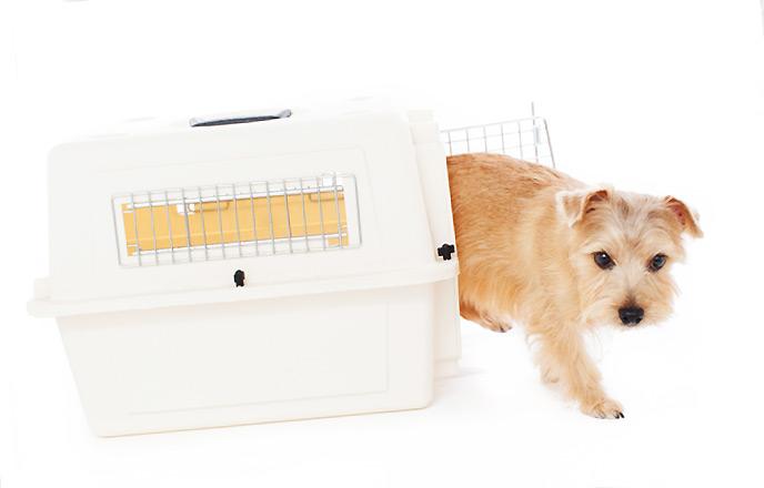 犬用のキャリーケース