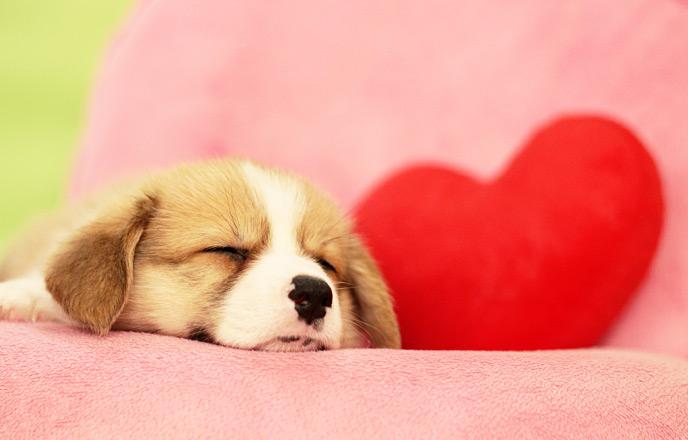 グッスリ眠る犬