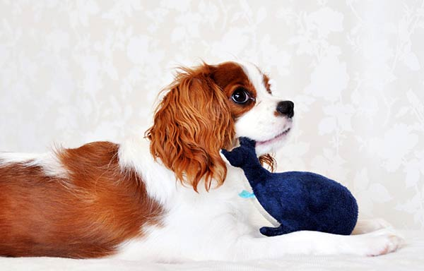 おもちゃのぬいぐるみで遊ぶ犬