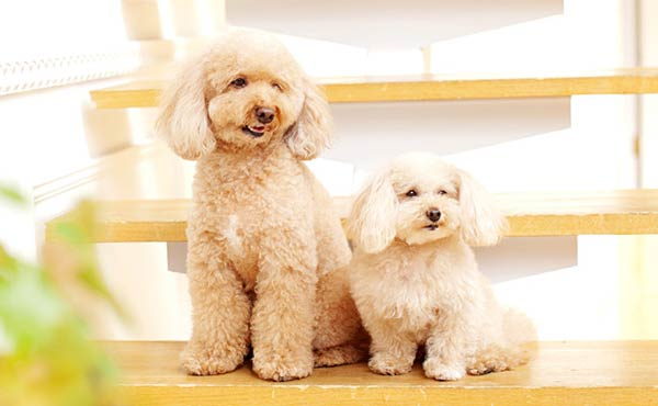 犬を飼う準備・家にやって来る前に用意しておくべき物
