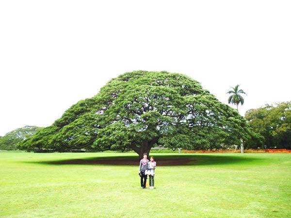 この木なんの木、気になる木のCMで見たことがある木に似ていますね