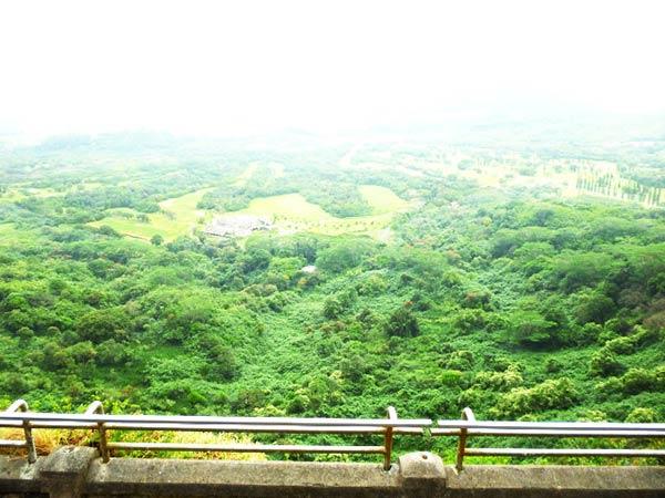 見渡す限りの緑の絶景